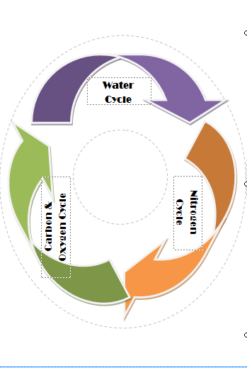 Natural Cycles Image